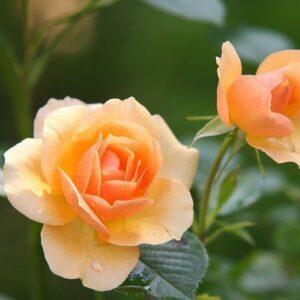 Aimer et le Tarot : les 3 façons d'aimer