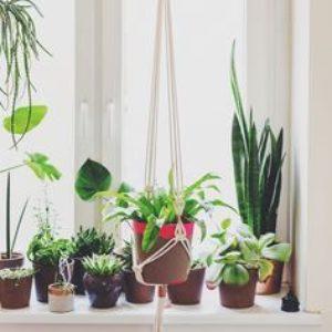 Un tirage pour faire vivre le printemps dans votre vie